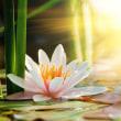 日本の主宰神を超えて、太陽の神として、地球を照らす慈悲の神へ――。新たな霊言の開示「天照大神の信仰継承霊言」