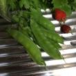 「旬」の取り立て野菜