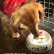 「ニコ」2歳の誕生日、おめでとう!