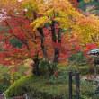 善峯寺の紅葉(1)