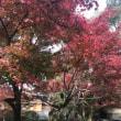 改めて、京都。