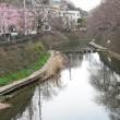 全国7位 大岡川桜プロムナードの巻