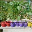 夏物野菜の植え付け。