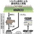<原発のない国へ 福島からの風> 飼料作物から発電
