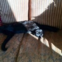 のび〜る黒猫