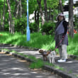 いつもの散歩道 (20180423)