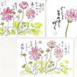 2017.9.12 西福寺にコスモス咲く