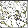 センニンソウ(絵手紙)