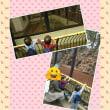 動物園と誕生日