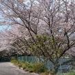 桜満開 2018.4.2