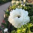 今日のヘビロテ×麗しい花