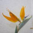 ストレリチアの花がお客様をお迎えします