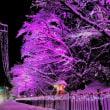 天朝山公園の 「冬の桜 3」