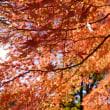 神代植物公園 紅葉
