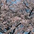 【古い写真】2006年05月 横吹のしだれ桜 他
