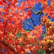 水鏡の紅葉 緑水苑(福島県郡山市)メグスリノキの紅葉