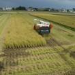 稲刈ラストスパート
