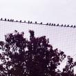 我が家の庭の小鳥たち2