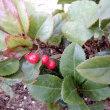 庭で咲く花&赤い実・・・