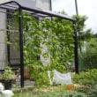 2011年7月2日の家庭菜園