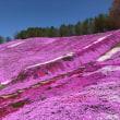 ひがしもこと芝桜公園 in北海道