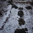 今日は高知市内に初雪