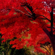 桐生市宝徳寺-床に紅葉映る