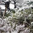 19-04-11 名残雪