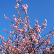 立春の江ノ島