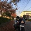 秋の暮 小鉄馬燃ゆる 落葉敷