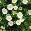 めまぐるしく咲いていく花たち