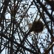野鳥の巣?