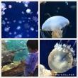 新江の島水族館へ☆