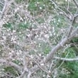 十月桜はせつない花です
