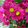 今日のお花達!🌸