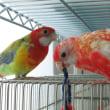 鳥友できるかな?(^.^)