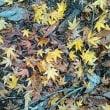熊野古道を歩いてみた!~滝尻から高原~2時間