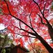 平林寺の紅葉 2017 その3(超広角10ミリレンズで撮影)