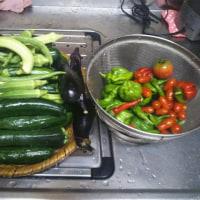 家庭菜園の夏野菜の収穫が終わります。