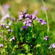 花彩々   紫色鮮やか
