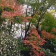 紅葉撮り 12 諸羽神社 京都市山科区・・・案外有名