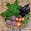 山楽の 山の野菜セット ~8月〔5〕回目・9月〔1〕回目