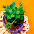 換毛チップと 癒しの植物