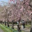 春爛漫!!