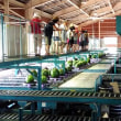 JA魚沼みなみの八色西瓜集荷場見学に行ってきました^^
