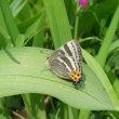 ● 早春に現れていたチョウたち ・ シジミチョウ科  (追記あり)