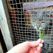 本宅の風太も、猫草が大好きやきぃ~♪