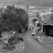 尾鷲の石垣(賀田町NO15)と天然柿