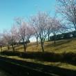 庭の花と逢妻桜