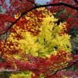 絢爛たる秋色
